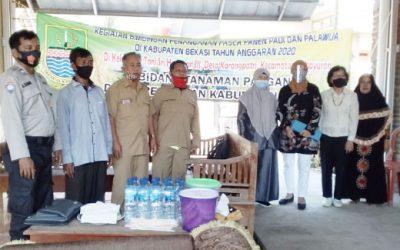 Dinas Pertanian Kabupaten Bekasi Berikan Bimbingan Penanganan Pasca Panen.